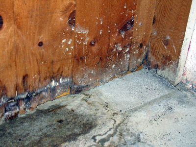 Sterling Heights's Choice for Mold Remediation - MJM Property Restoration - mold1