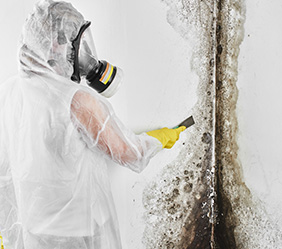 Mold Remediation Company in Warren Michigan - mold2-new