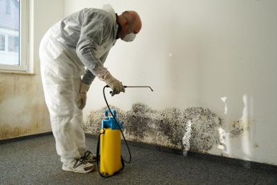 Livonia's Choice for Mold Remediation - MJM Property Restoration - mold2
