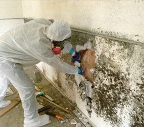 Mold Remediation Company in Warren Michigan - mold2